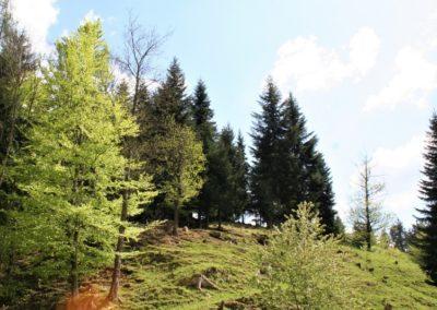pasnik-gozd